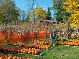 Pumpkin Festival Cleveland Ohio by Celebrate Halloween With These 15 Events In Northeast Ohio News