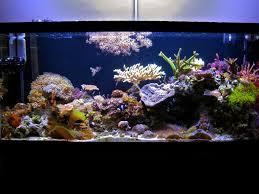 Halloween Hermit Crab Reef Safe by Diver U0027s Paradise The Original Aquarium Journals Nano Reef