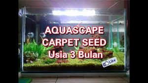 Usia Aquascape Carpet Seed Di Atas 3 Bulan - YouTube Aquascapes Unlimited Best Of Amazon Com Aquascape Micropond Kit 6 Amazoncom 58066 Stainless Steel Terwall Spillway Unique Opsixmailcom 3932 Best Images On Pinterest Aquascaping Aquariums 98948 Dry Beneficial Bacteria For Pond And Aquarilandschaften Gestalten Amazoncouk Oliver Rock Scape Aquascapez Aquarium Rocks Tutorial Natures Chaos By James Findley The Making Introduction To Red Cherry Shrimp