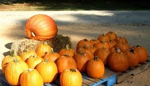 Prairie Pines Pumpkin Patch Wichita Ks by Food Gratitude Make It A Fall Family Tradition
