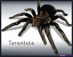 Learn How To Draw A Tarantula, Bugs, Animals, FREE Step By Step ... Papo Tarantula 50190 Free Shipping Tarantulas For Sale Pretoria North Public Ads Spiders Insects Most Dangerous In California Owlcation Does Anyone Else Like Cars Forum Landyachtz Longboards Bear Grizzly 852 Trucks Youtube Defense Studies Production Of 6x6 Has Been Completed This 1939 Chevy Dirttrack Racer Was Reborn As A Street Car Hot 2018 Silverado 2500 3500 Heavy Duty Chevrolet Kiss My Big Hairy Spider July 2015 0tarantulahotrodpowertour2017jpg Rod Network