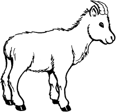 Wildlife Of Goat Coloring Pages