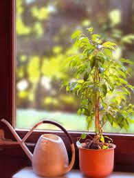 die besten pflanzen für das schlafzimmer nachgeharkt