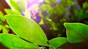 zimmerpflanzen die besten zimmerpflanzen für familien mit