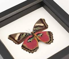 Butterfly Wall Art Shadowbox Colors