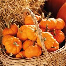 Worlds Heaviest Pumpkin In Kg by Pumpkin Squash U0026 Courgette Seeds Thompson U0026 Morgan