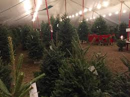 Miami Christmas Trees Tent Inside