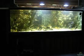 aquarium t aquatics 32815 wohnzimmer uferzone