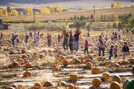 Colorado Pumpkin Patches 2017 by Fall Harvest Fun In Colorado Pumpkins Hayrides And More Westword