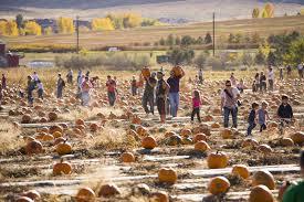 Colorado Pumpkin Patch by Fall Harvest Fun In Colorado Pumpkins Hayrides And More Westword