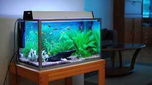 Bright Idea Aquariums For Home Transform The Way Your Home Looks ... Home Designs Built In Aquarium 4 Homes With Design Focused On Living Room Modern Style For L Tremendous Then Fish Tank Decorations Interior Stunning Ideas Images Best Idea Home Design Cuisine Amazing Decor Gallery Wonderful Bedroom 20 For House Goadesigncom Aquariums Refresh With Different Tropical Vibe Kitchen Decoration Cool The Divine Renovation 35 Youtube Rousing Channel Designsfor Tv Desing Bar Stools Counter Pictures On Wall