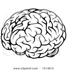 Human Brain Coloring Book Download Black And White 3 Clipart Panda Free Images