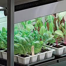 Gardening Under Grow Lights