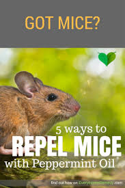 Does Peppermint Oil Repel Mice? Yes! Get Rid Of Mice Easy Mice How To Identity And Get Rid Of In The Garden Home Rats Guaranteed 4 Easy Steps Youtube Does Peppermint Oil Repel Yes Best 25 Getting Rid Rats Ideas On Pinterest 8 Questions Answers About Deer Hantavirus Mouse Control To Of In The Keep Away From Bird Feeders Walls 2 Quick Ways That Work Get Rid Of Rats Using This 3 Home Methods Naturally Dangers Rat Poison Dr Axe Out Your Without Killing Them
