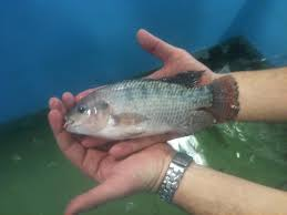 Fish Farm Going Green In The Bluegrass State