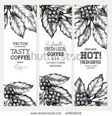 Coffee Tree Illustration Engraved Style Vintage Banner Collection Vector