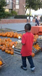 Pumpkin Farms In Waldorf Maryland by Black Farmers Brown Farming