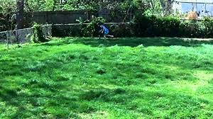 Kid Gets MAD About Cleaning Up Dog Poop - YouTube Keep Odors Locked Inside With The Poovault Best 25 Dog Run Yard Ideas On Pinterest Backyard Potty Wichita Kansas Pooper Scooper Dog Poop Cleanup Pet Pooper Scoop Scooper Service Waste Removal Doodycalls Doodyfree Removalpooper 718dogpoop Outdoor Poop Garbage Can This Is Where The Goes 10 Tips To Remove Angies List Top Scoopers Reviewed In 2017 Backyards Wonderful 1000 Ideas About Backyard Basketball Court Station Bag Dispenser I Could Totally Diy This For A