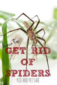 Remains Of The Day Spiders by How To Get Rid Of Spiders In Your Home Housewife How To U0027s