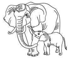 Giant Panda Elephant Online Coloring