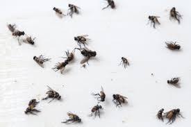 fliegen nachhaltig bekämpfen apel schädlingsbekämpfung