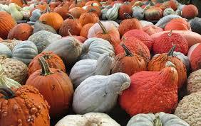 Pumpkin Patch Yuma Az Hours by Crockett Farms Flourishes In Fall Home U0026 Garden Newspressnow Com