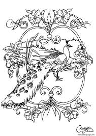 Adult Animals Peacock Coloring Pages Print Download
