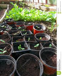 100 Seedling Truck Greenhouse Seedling Stock Photo Image Of Cultivation 30944978