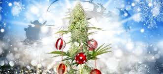 In A Sign Of The Mainstreaming Marijuana United States Consumers Can Purchase Original Weed Christmas Tree At Walmart