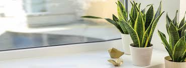 zimmerpflanzen für wenig licht top 7 pflanzen kölle