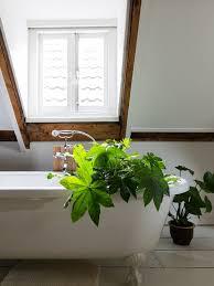 must badezimmerpflanzen pflanzenfreude