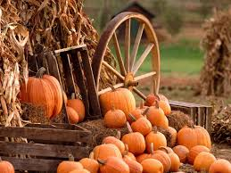 Columbus Ohio Pumpkin Patches by Fall Harvest Wallpapers Free U2022 Dodskypict