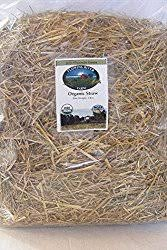 Pine Bedding For Guinea Pigs by What Are The Best Bedding For Guinea Pigs And What To Avoid
