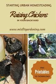 103 Best Backyard Chickens Images On Pinterest | Backyard Chickens ... Cheap How To Raise Chickens Find Deals On Heritage Chicken Breeds For Your Backyard With 1000 Images About Buy Guide Beginners Easy Steps Starting Egg Production Homestead Advisor 7 Reasons You Should Raising 101 In In Magnolia Market Chip Joanna Gaines 1251 Best Images Pinterest The Chick Veterinary Care For A Big Ed Barnham Limited Free Range 12 Tips To Balance Freedom Safety