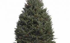 Types Of Real Christmas Trees The Home Depot In Near Me