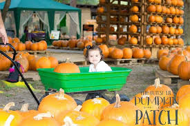 Pumpkin Patch Near Killeen Tx by Pumpkin Patch Pictures At Clear Lake United Methodist Church