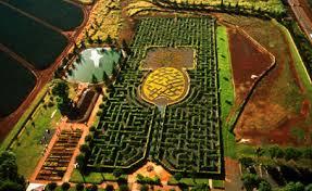 Dole Plantation Pineapple Maze on Oahu at Hawaii Hawaii s …