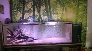aquarium wildes wohnzimmer nur noch als beispiel aus
