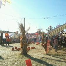 Pumpkin Picking Patchogue Ny by Randys Pumpkin Patch Home Facebook