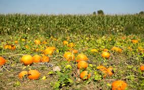 Boulder Pumpkin Patch 2015 by Where To Go Pumpkin Picking In Nj Travel Leisure
