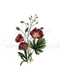 Maroon Flower Botanical Illustration Dark Red Clipart Vintage Digital Image For Print Artwork