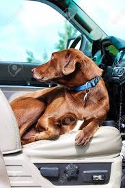 A Dog Sitting Comfortably In The Front Seat Of A Truck Stock Photo ... Hot Dog Of A Food Truck Pays Off For Monroe Fatherson Duo Driver In Arizona Forgets Leashed To Famous Dog Ramp For Truck Ideas Bravasdogs Home Blog The Best Is It Legal Put The Back Pickup Treat East Greenbush Albany Ny Mugzys Barkery Traveling With Your Pet This Holiday Part 4 Mckinney Animal Driving Lorry Stock Photos Images Alamy Crate Pickup N Treats Free Window Cute Canine Transportation Waiting Love Like A Truckin Farmer And Near Photo Getty Why You Shouldnt Let Your Ride Back One