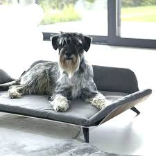 magasin canapé luxembourg magasin lit luxembourg canape lit luxe canapac lit luxe pour chien