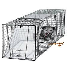 live cat trap oxgord live animal trap 24 x 7 x 7 gfa catch and release humane