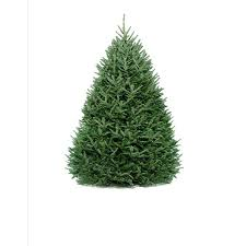12 Ft Christmas Tree Canada by Shop Fresh Christmas Trees At Lowes Com