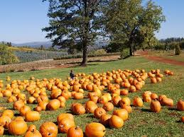 Pumpkin Patch Reno by 4 Fall Getaways Within A Day U0027s Drive Of Reno
