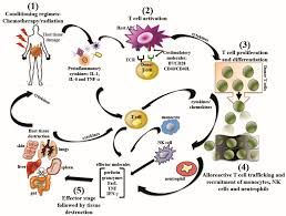 Viruses | Free Full-Text | Therapeutics For Graft-versus-Host ... March 23rd 2011 Day 12 Engraftment And Graft Vs Host Diase Frontiers The Role Of Regulatory T Cells In The Biology Idenfication A Major Susceptibility Locus For Lethal Biology Graftversushost Diase Experimental Systems Nk Cell Immunotherapy Glycostem Localization Sclerotictype Chronic Graftvshost To Histopathologic Diagnosis Chronic Signs Graftvshost Effects John Bugay Plosophical Traactions Royal Society B Biological Sciences Blood Outperforms Matched Unrelated Donor Bone Marrow Trsplant Review Cutaneous Actas Dermo