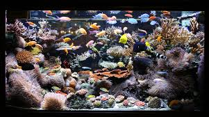 Large Custom Living Coral Reef Saltwater Aquariums NYC Is This Aquascape Ok Aquarium Advice Forum Community Reefcleaners Rock Aquascaping Contest Live Rocks In Your Saltwater Post Your Modern Aquascape Reef Central Online There A Science To Live Rock Sanctuary 90 Gallon Build Update 9 Youtube Page 3 The Tank Show Skills 16 How Care What Makes Great Large Custom Living Coral Aquariums Nyc