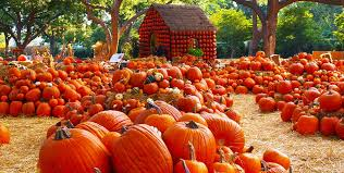 Mission Valley Pumpkin Patch by The Best Pumpkin Patches Around La Chelsea Robinson Real Estate