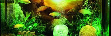 Spongebob Aquarium Decorating Kit by Aquarium Decoration Themes Tuned Fish Tanks